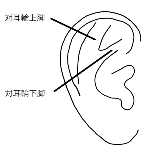 耳介説明図